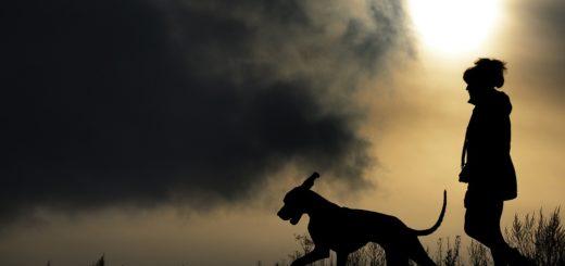 größte hunderasse