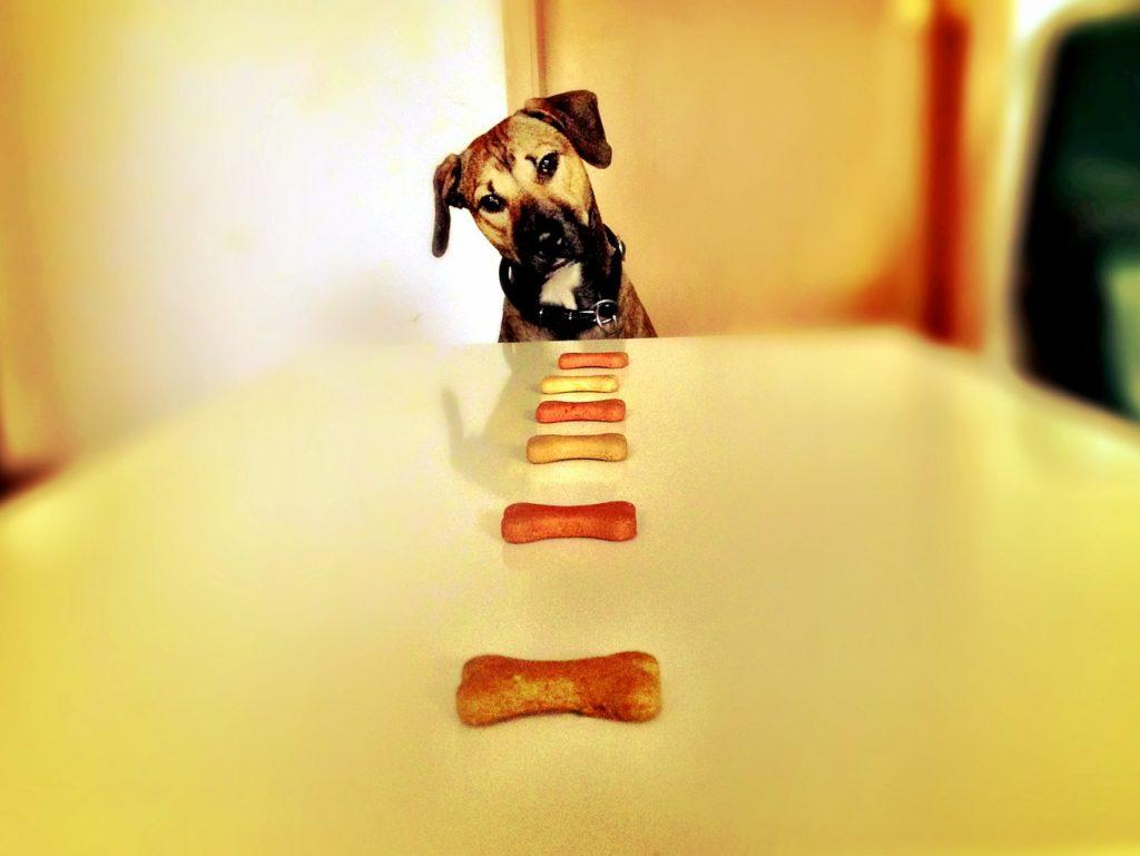 hundefutter kaltgepresst