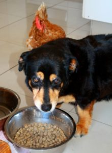 hund ernährungsumstellung