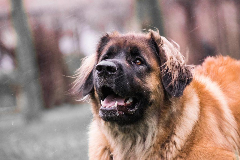 hundebellen, exzessives hundebellen