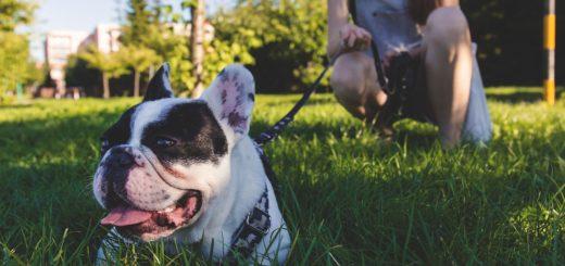 schleppleine für hunde