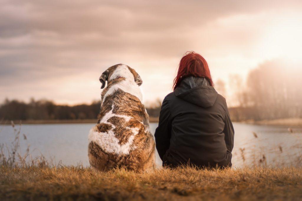 wie lange leben hunde