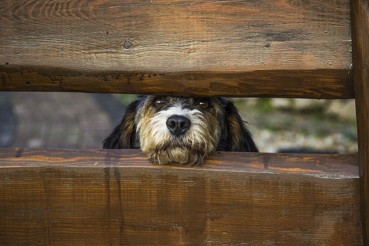 unsichtbarer hundezaun