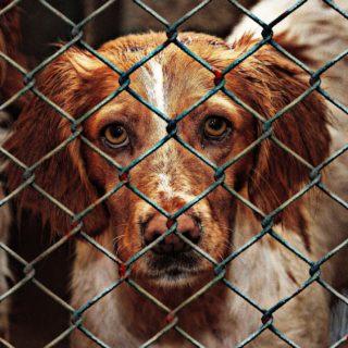 hund aus dem hundeheim