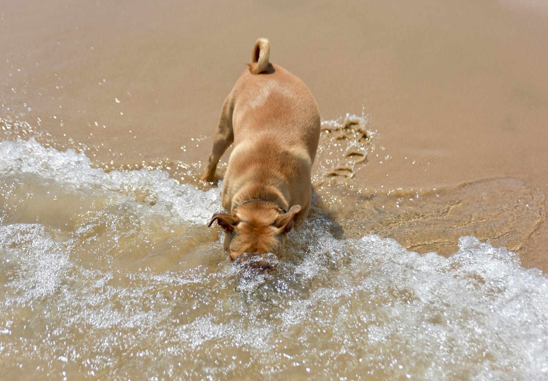 symptome hitzschlag hund
