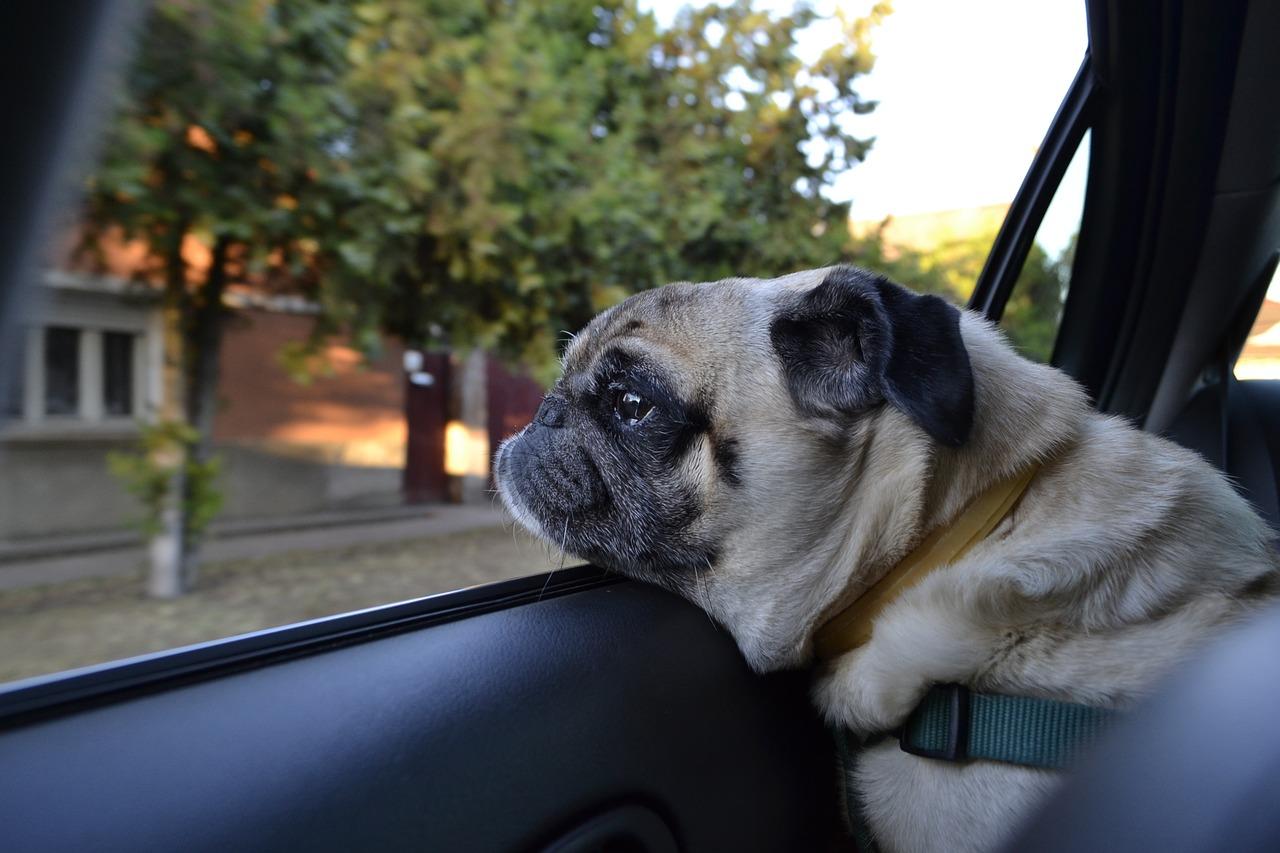 reisen mit hund im auto