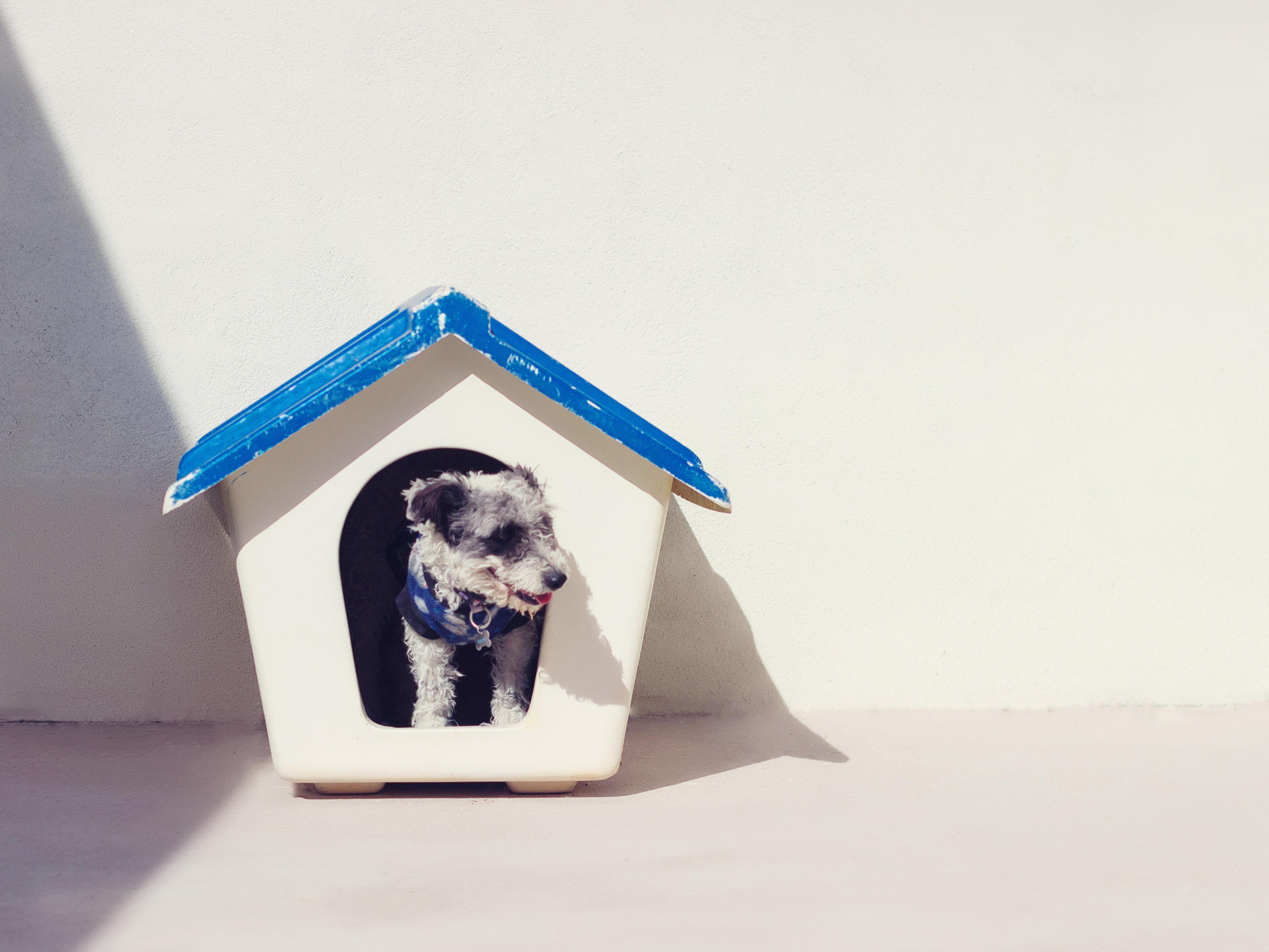 tierheim hund adoptieren