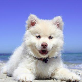 Ferienhaus Hund am See