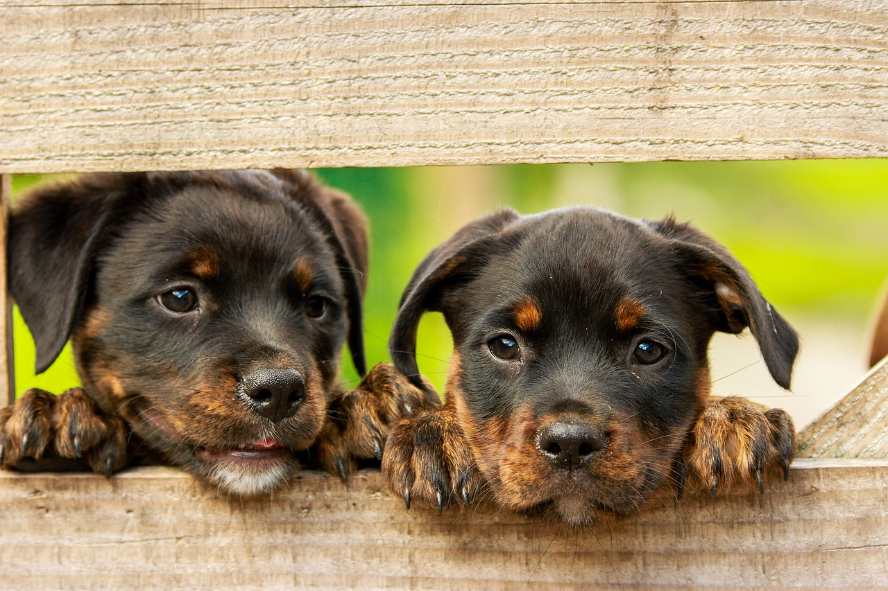 seriöse Hundezüchter