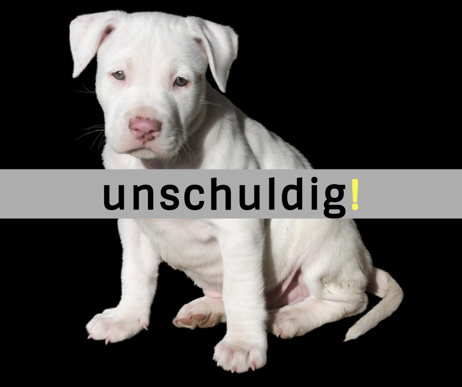 pitbull diskussion