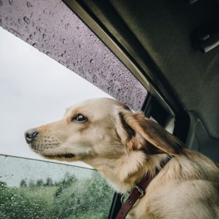 reisen mit hund hundedecke