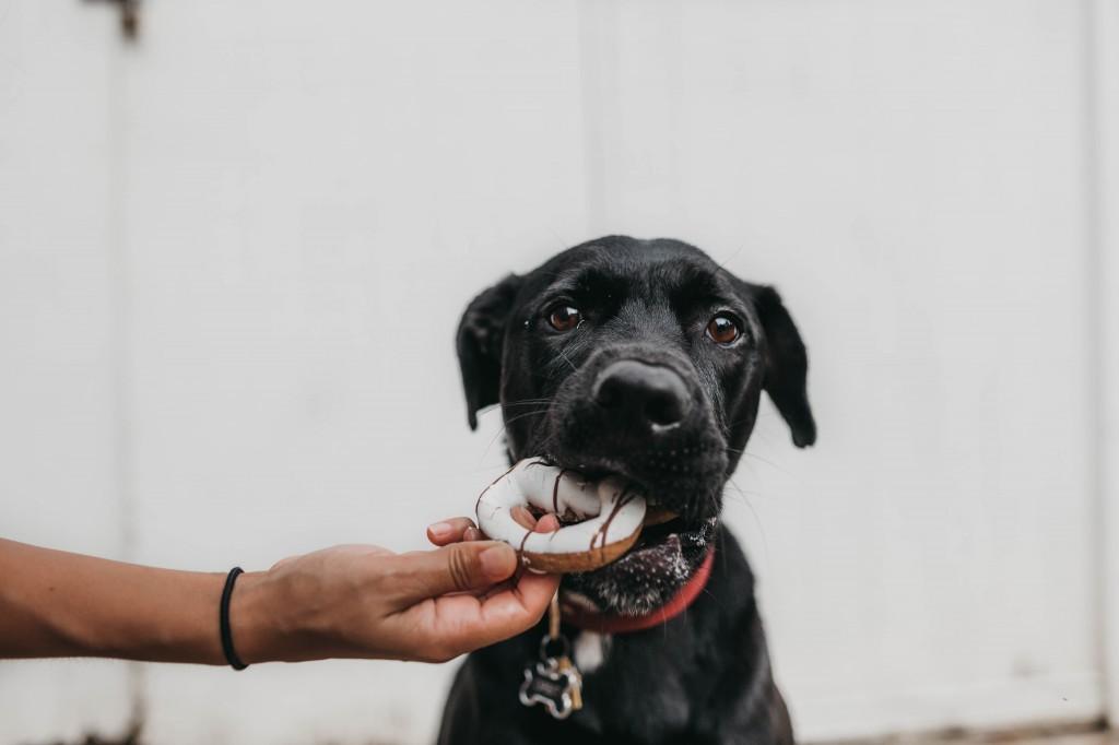 hunde ernährung wichtig für die hunde diät