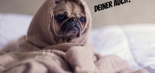 hund im bett