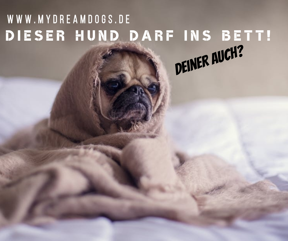 Darf Euer Hund Ins Bett Mydreamdogs