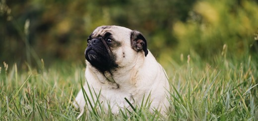 Hunde mit Übergewicht