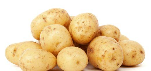dürfen hunde kartoffeln essen