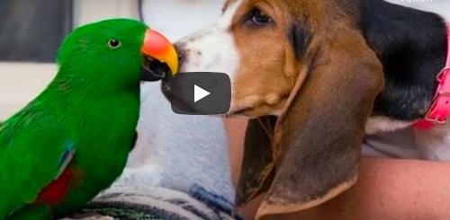 hunde und papageien