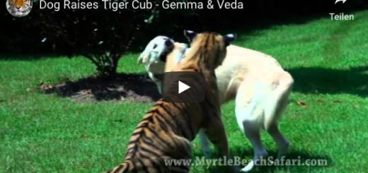 hund und tiger