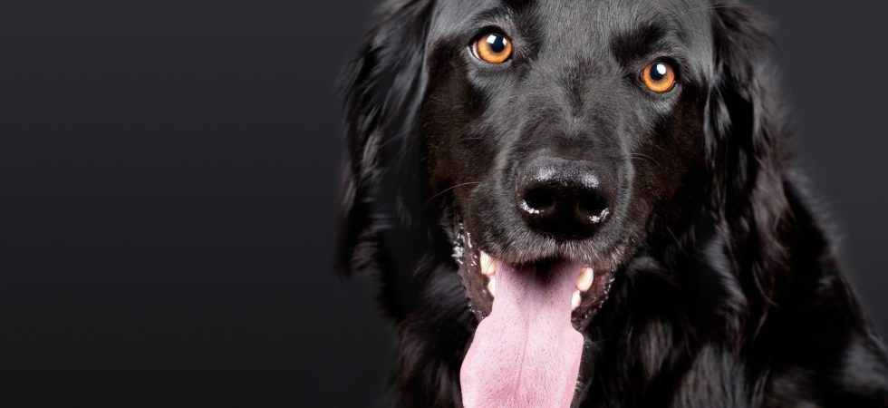 cbd leckerlis hund