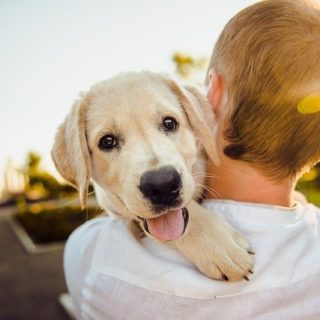 Nassfutter Hund